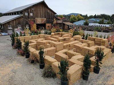 Fall Festival This Weekend At Hayden S New Leaf Nursery